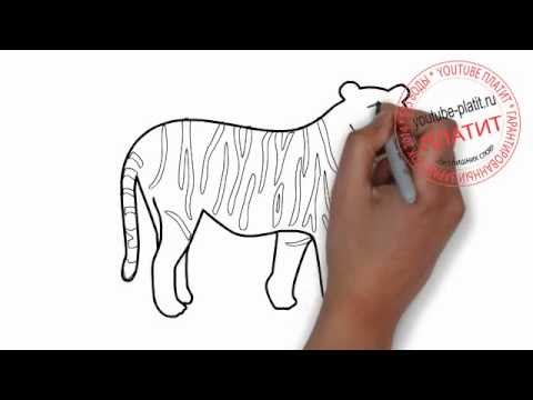 Рисунки тигров