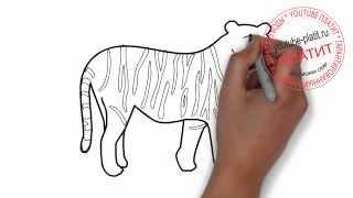 Как нарисовать карандашом полосатого тигра поэтапно(Как нарисовать тигра поэтапно карандашом за короткий промежуток времени. Видео рассказывает о том, как..., 2014-07-10T14:01:53.000Z)