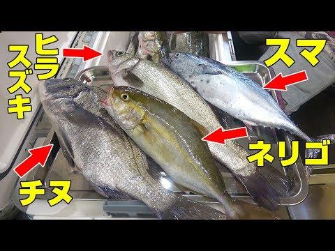 「幻の魚・荒磯の王者」入り豪華海鮮丼を作って食う‼