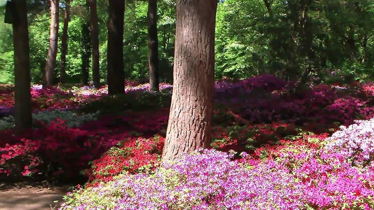 20080523 rhododendron park bremen teil 2 3 youtube. Black Bedroom Furniture Sets. Home Design Ideas