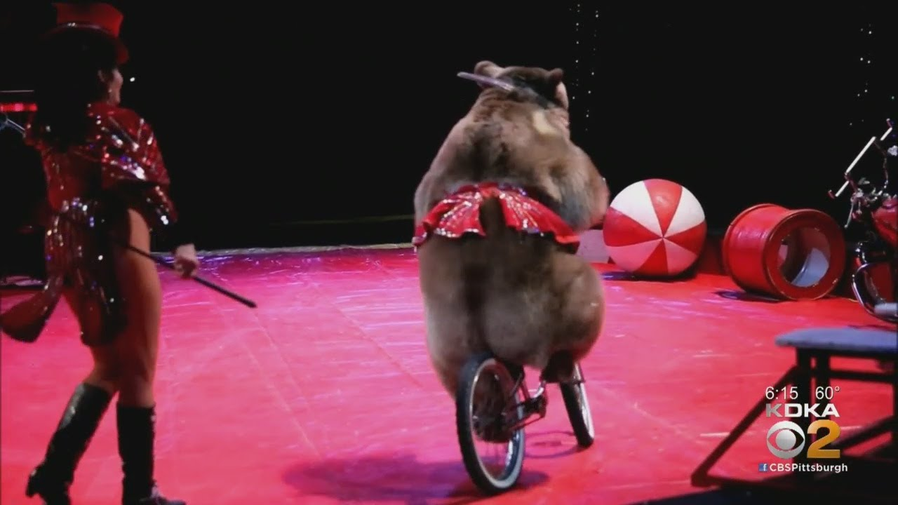 Shriners Circus Not Coming To Pittsburgh This Year