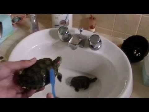 how to clean a turtles shell