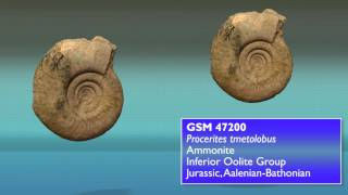 3D fossil images: GB/3D fossil types project
