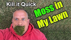 Get rid of Moss in Lawn - How To