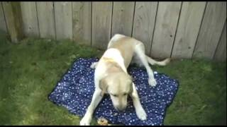 Product Review: Pet Cooling Mat By Body Cooler