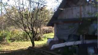 Пчеловодство для начинающих видео 2