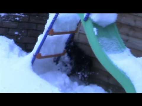 stupid snow scoodle