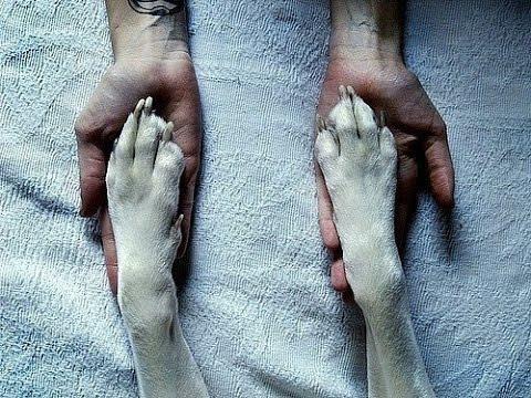 Лучший друг человека: щенок не оставил раненого хозяина...