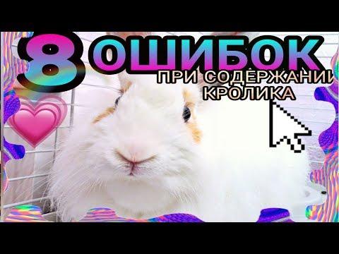 8 Ошибок При Содержании Кролика/1 часть
