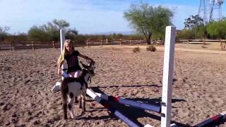 Cute little girl training baby donkey [cute pet videos cute animals doing cute things]