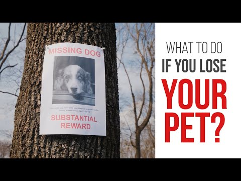 What To Do If You Lose Your Pet