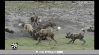 Самые страшные нападения животных за 2016