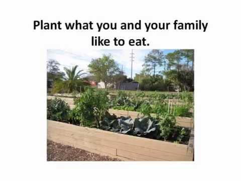 Plant Selection U0026 Layout / Your Florida Vegetable Garden