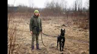 Курсы кинологов-дрессировщиков - весна 2015