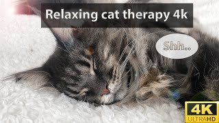 4k| Relaxing cat therapy