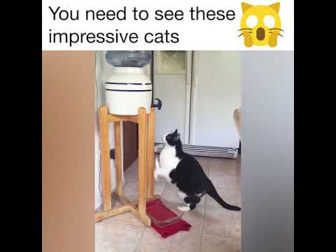 13SAVAGE CATS FUNNY