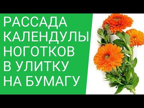 Семена Бренд Гавриш в GAVRISH
