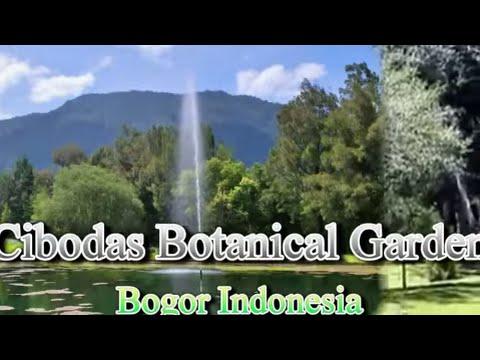 Wisata Indonesia Kebun Raya Cibodas Bogor Jawa Barat