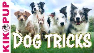 Favorite Dog Tricks Compilation