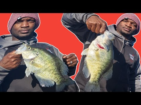 Beginner Fishermen Can Catch MONSTER Crappie... JUST WATCH