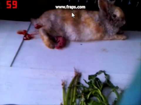กระต่ายคลอดลูก
