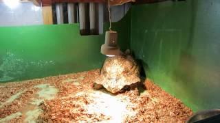 Черепаха в минском зоопарке.(группа вконтакте: http://vk.com/pgshelp1 сайт: https://sites.google.com/site/na5balov заказать работу: ..., 2014-07-23T16:20:25.000Z)
