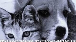 Помогайте бездомным животным, Мы в ответе за тех кого приручили!