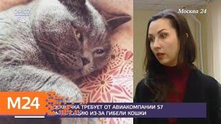 Москвичка требует от авиакомпании S7 компенсацию из-за гибели кошки - Москва 24