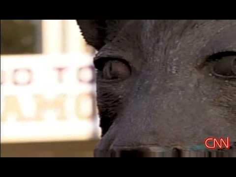 MIA KHALIFA-WORLD-OF-PORNSTARS from YouTube · Duration:  5 minutes 1 seconds