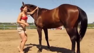 Hayvanlar Alemi - Akıllı At