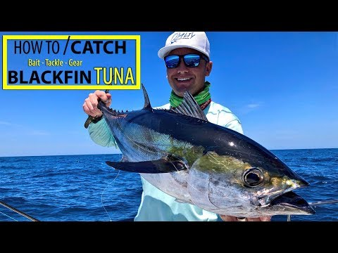 How To Catch Blackfin Tuna | Best Bait To Use | Fishing For Blackfin Tuna Anna Maria Isalnd Florida