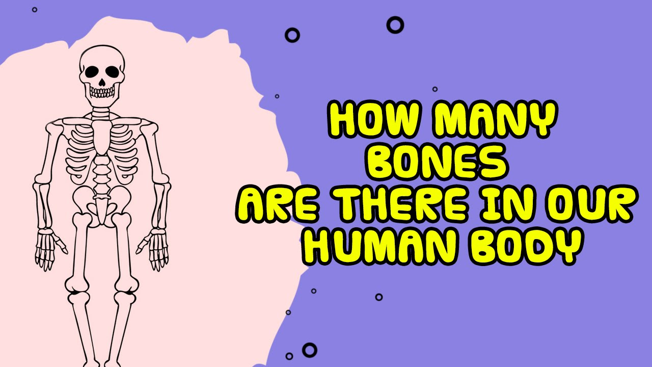 Bones in the Human Body - human body bones name