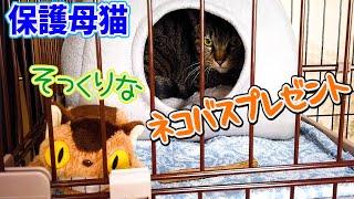 保護母猫家猫化 UFOベッドを転がしたり そっくりなネコバスをプレゼント! Kitten Cat Japanese traditional house