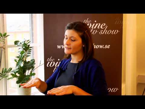 Gaia Gaja – Intervju