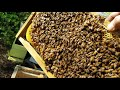 Beekeeping mistakes, ventilate your honey bee hive