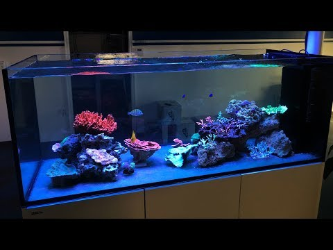 Vlog 24: Live Corals in The Red Sea Peninsula