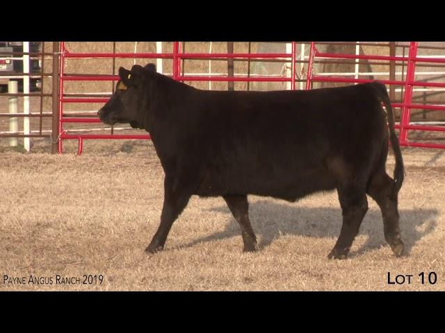 Payne Angus Ranch Lot 10