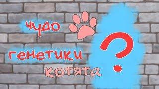 Чудо генетики Кошки и Собаки | CAS - создание персонажей