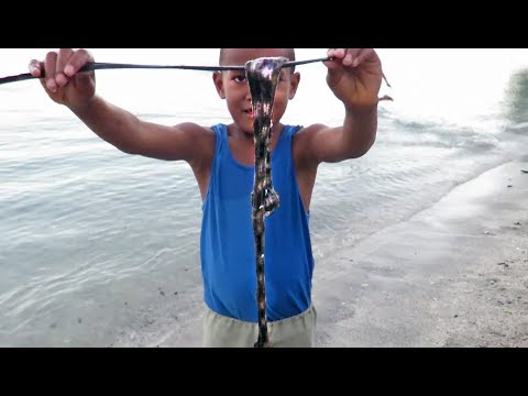 37. DISGUSTING! Would you EVER eat this? Fiji's Beche-de-Mer @Sailing The Life Nomadik