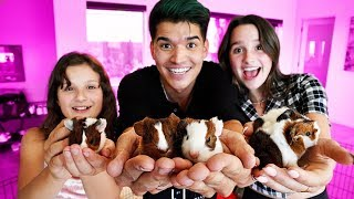 world-s-tiniest-guinea-pig-surprise-ft-annie-hayley-leblanc