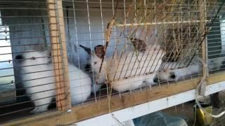 клетка для кроликов своими руками со без вложений