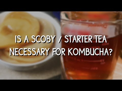 is-a-scoby/starter-tea-necessary-for-making-kombucha?