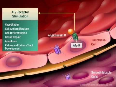 Renin Angiotensin Aldosterone System