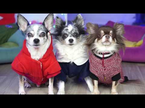 видео: НА СТИЛЕ! ПОКАЗ МОД ВОЛШЕБНЫХ ПИТОМЦЕВ! ГАРДЕРОБ magic pets часть 2