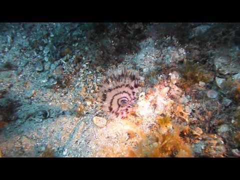 Plongée sur le tombant cannes - Golfe juan