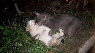 兩隻流浪貓打架.