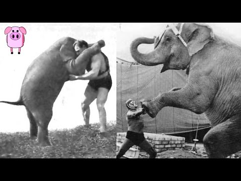5 Manly Feats Of Strength That Will Blow Your Mind Featuring TopTenz SlappedHamTV