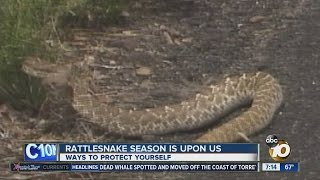 County Warns Public As Rattlesnake Season Looms