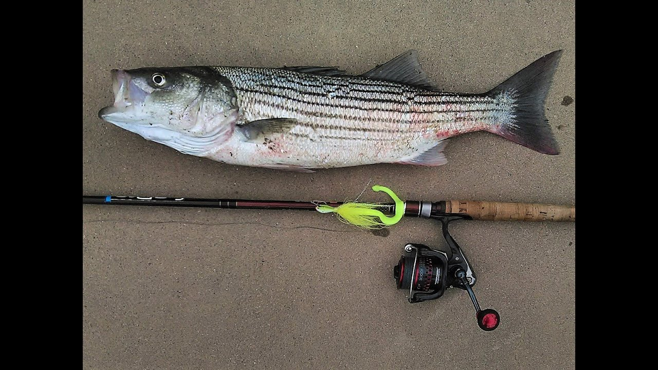 How to fish stripers in the san francisco bay late for Fall bass fishing tips