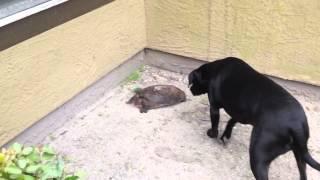 Jax meets a turtle
